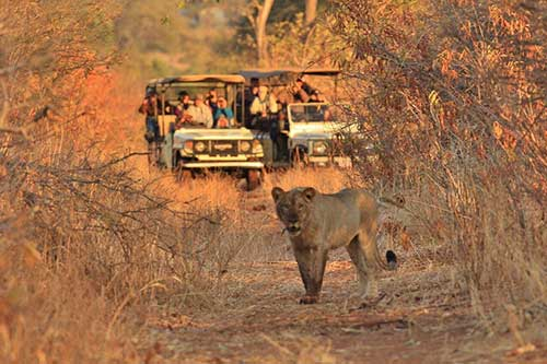 Game drive at Imbabala Zambezi Safari Lodge